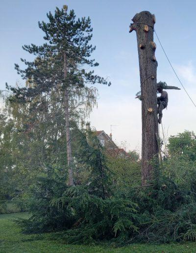 démontage arbre val de marne